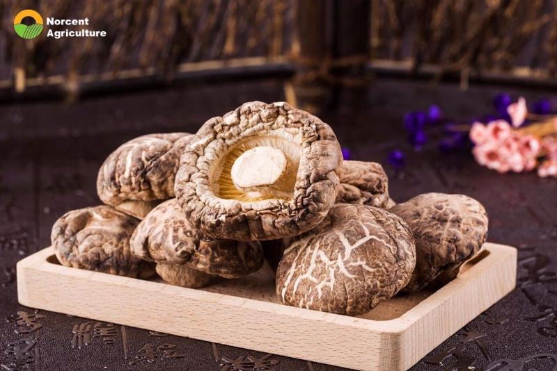 Explain the effects of the shiitake mushroom.