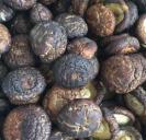 5cm Dried Washed Shiitake Mushroom